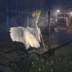 Cheeky Cocky