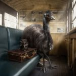 Emu Ride