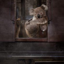 Koala Travels